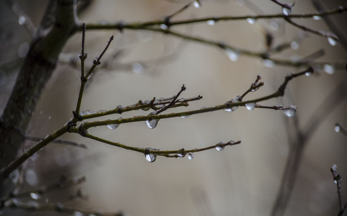 nature drops water wet rain storm branch twig macro close up wallpaper