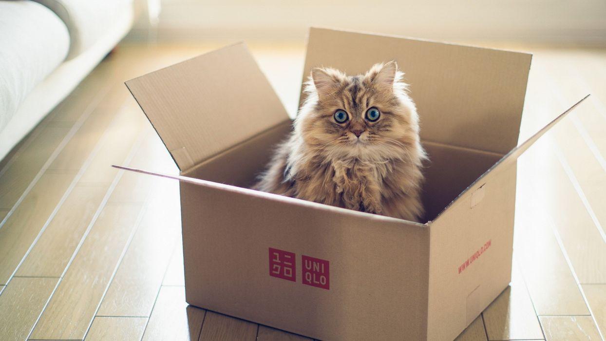 animals cats felines kittens fir eyes whiskers face cute wallpaper