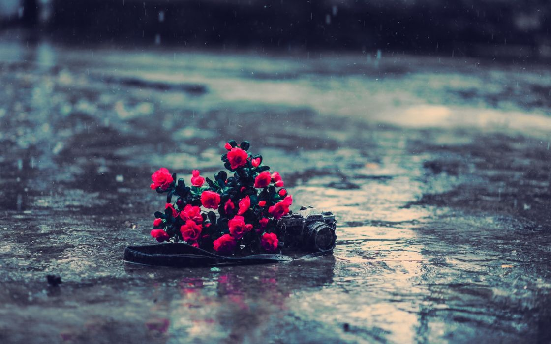 tech mech camera photography nature flower bouquets roses red color rain wet storm drpos reflections roads streets bokeh still life wallpaper