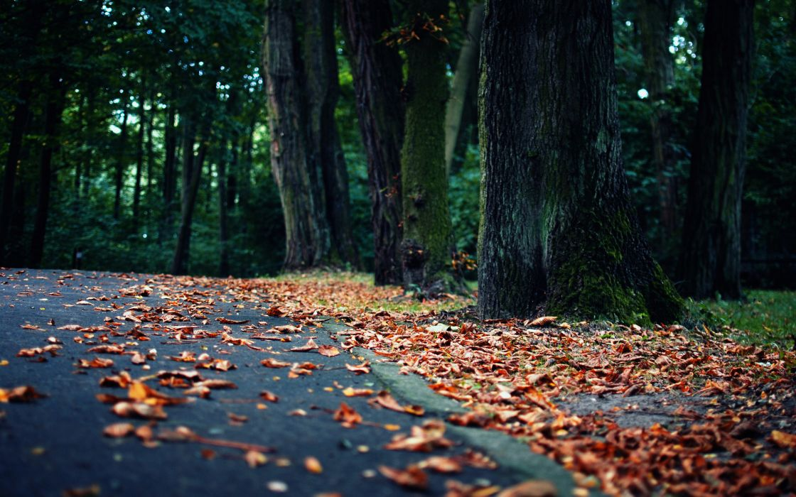 world roads street path trail nature landscapes trees garden park leaves autumn fall seasons wallpaper