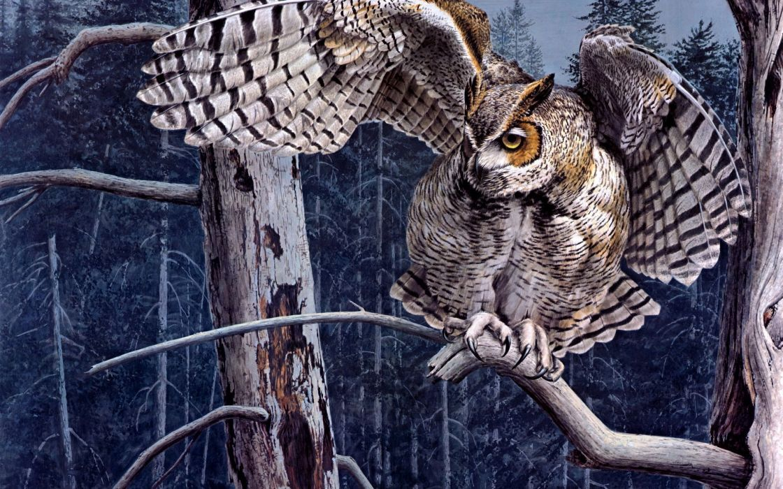 animals birds owls raptor predator wings wildlife feathers face eyes art artistic nature trees forests print paintings wallpaper