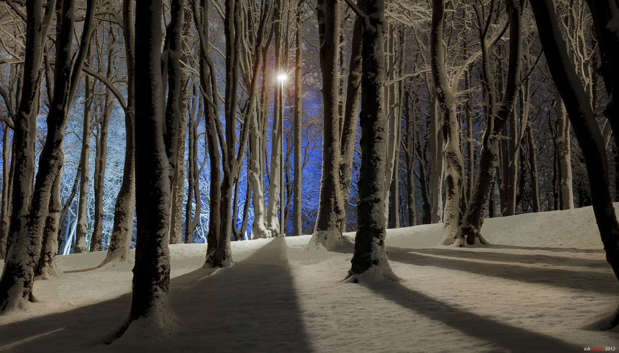nature landscapes trees forest winter snow seasonal lamp light post shadow wallpaper