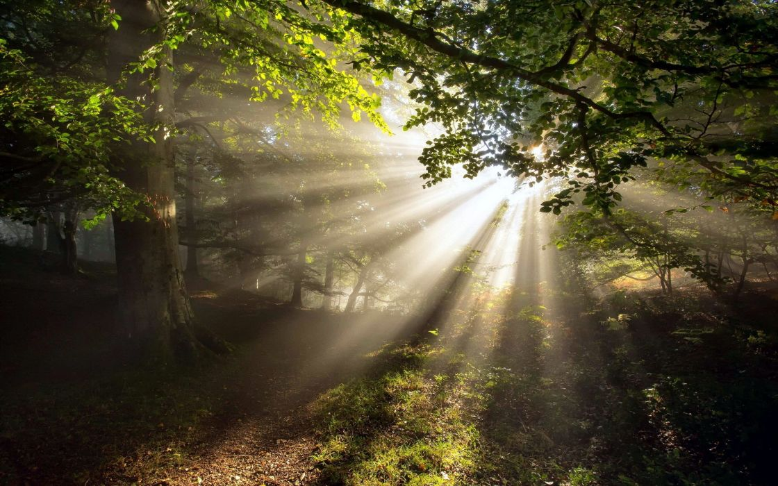 nature landscapes trees forest leaves path trail tracks spring seasons sun sunlight sunbeams bright scenic wallpaper