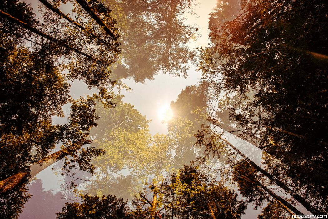 nature trees forest leaves jungle sun sunlight haze sky top foliage manipulation cg digital art artistic 3d wallpaper