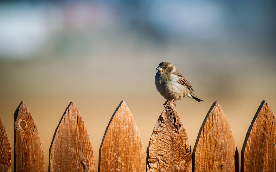 animals birds fence eyes pov stare feathers wallpaper