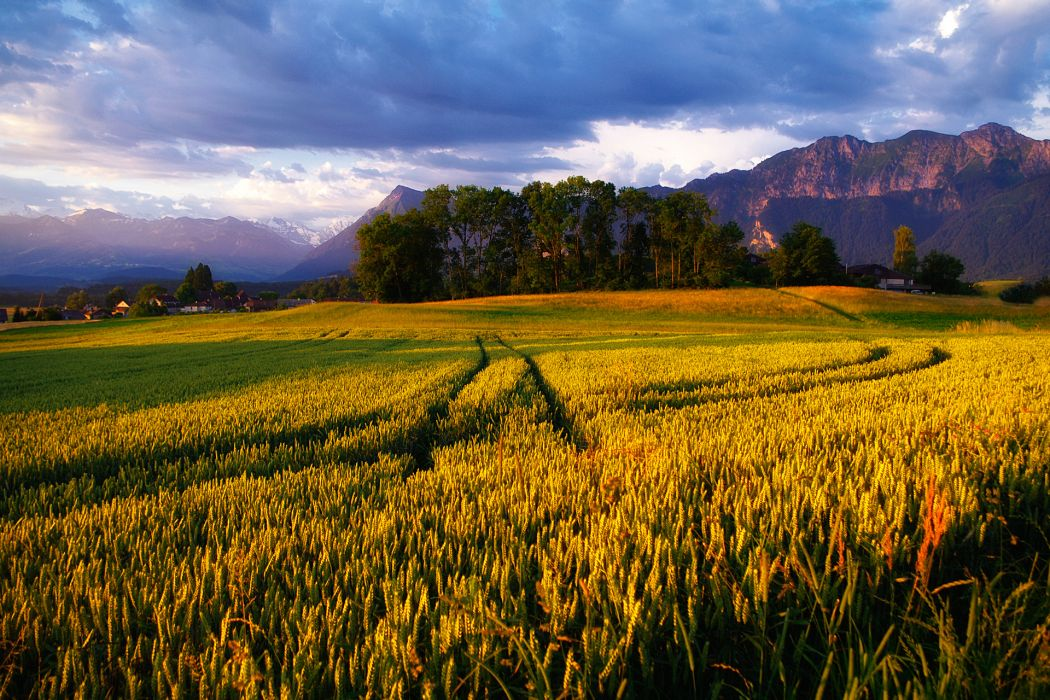 nature landscapes fields grass wheat crops tracks trail mountains trees farm rustic architecture buildings houses sunset sunrise scenic view wallpaper