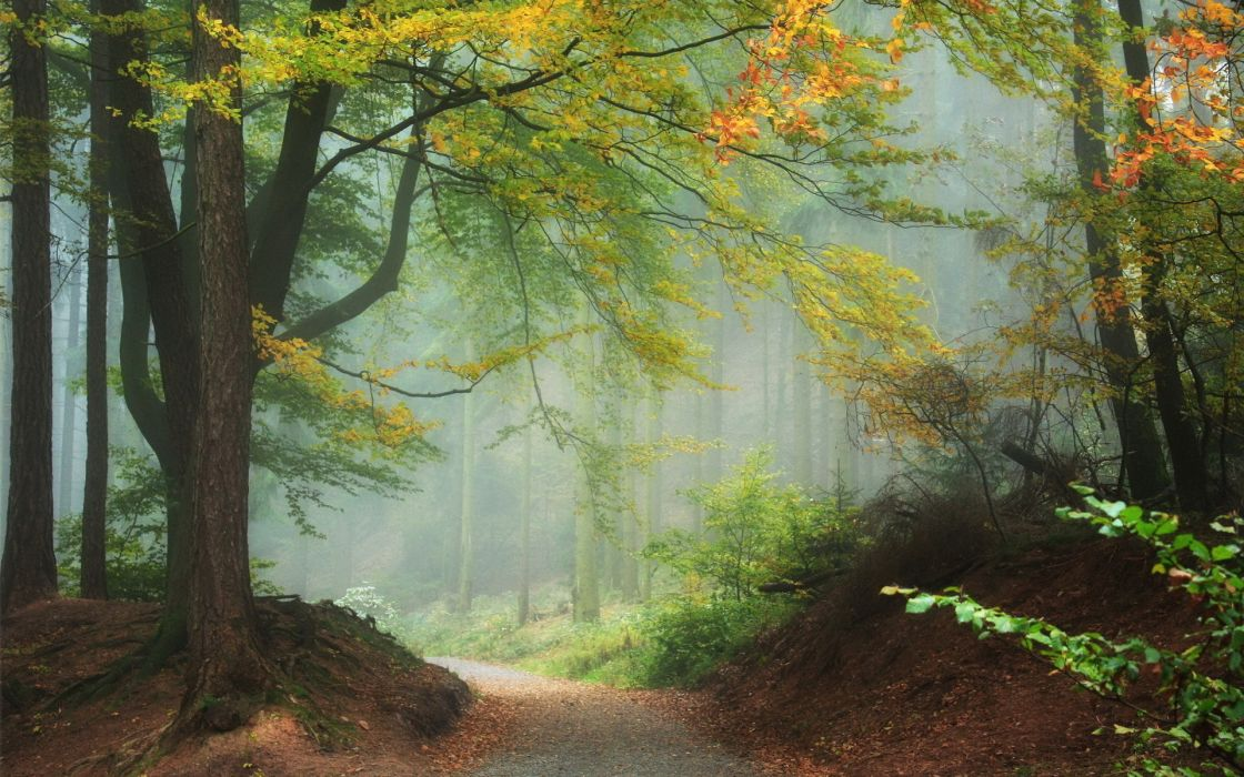 nature landscapes trees forest leaves autumn fall seasons path trail haze fog mist color wallpaper