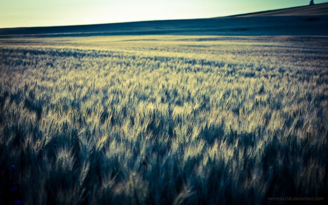nature landscapes fields grass crops wheat farm hills wallpaper