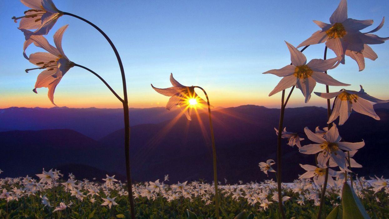 nature landscapes fields flowers plants mountains sky sunrise sunset sunlight sunbeam wallpaper