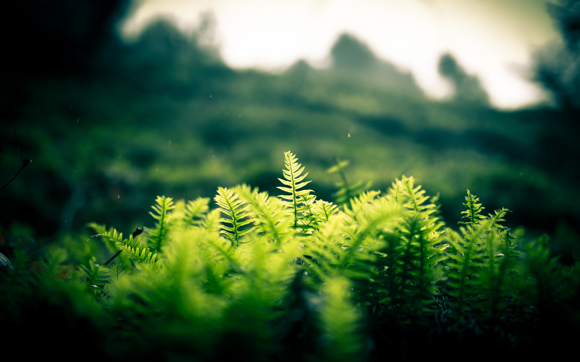 Nature landscapes plants fern hill trees forest jungle ...