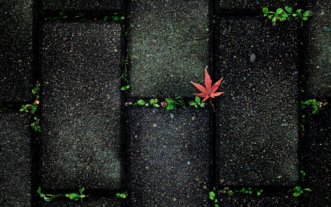 nature leaves autumn fall seasons sidewalk stones paving plants contrast color pattern abstract photography wallpaper