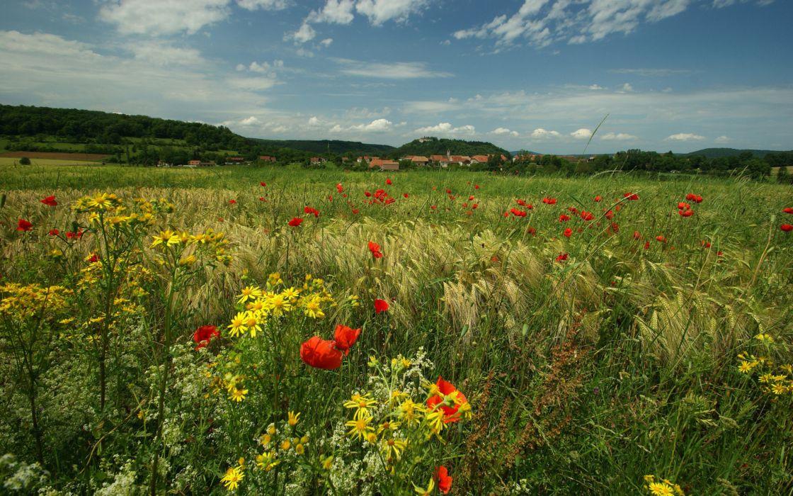 nature flowers fields landscapes color hills architecture buildings sky clouds trees town houses wallpaper