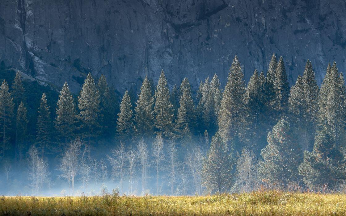 nature landscapes fields grass trees forest cliff mountains fog haze smoke mist wallpaper