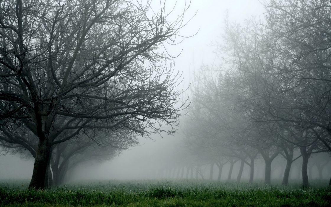 nature landscapes trees orchard fields grass fog mist haze fall autumn seasons wallpaper