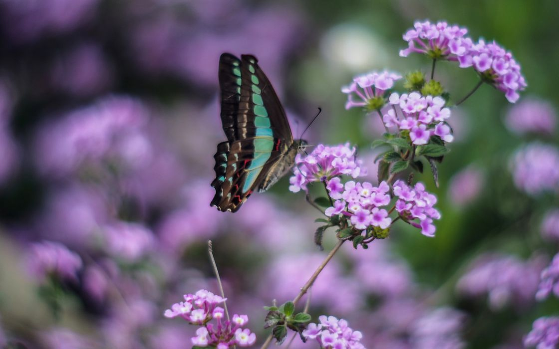 Animals insects butterfly flowers nature wildlife purple