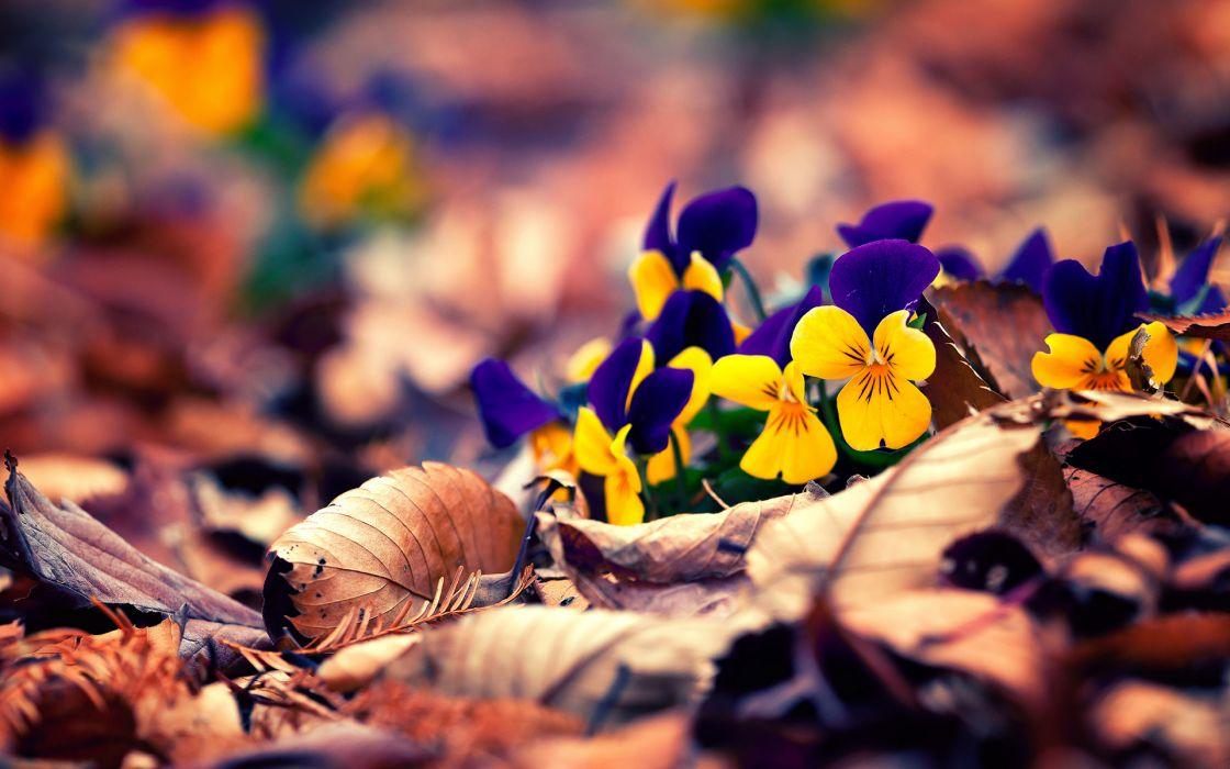 nature flowers leaves autumn fall seasons garden macro petals colors wallpaper