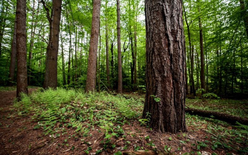 nature landscapes trees forest plants green leaves wallpaper