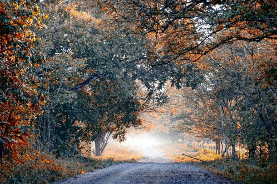 world roads lane street path nature landscapes trees forest fall autumn seasons leaves wallpaper