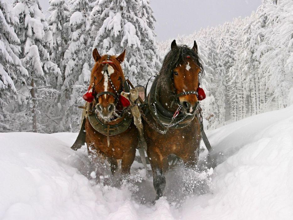 animals horses christmas winter snow seasons spray trees forest path trail tracks wallpaper