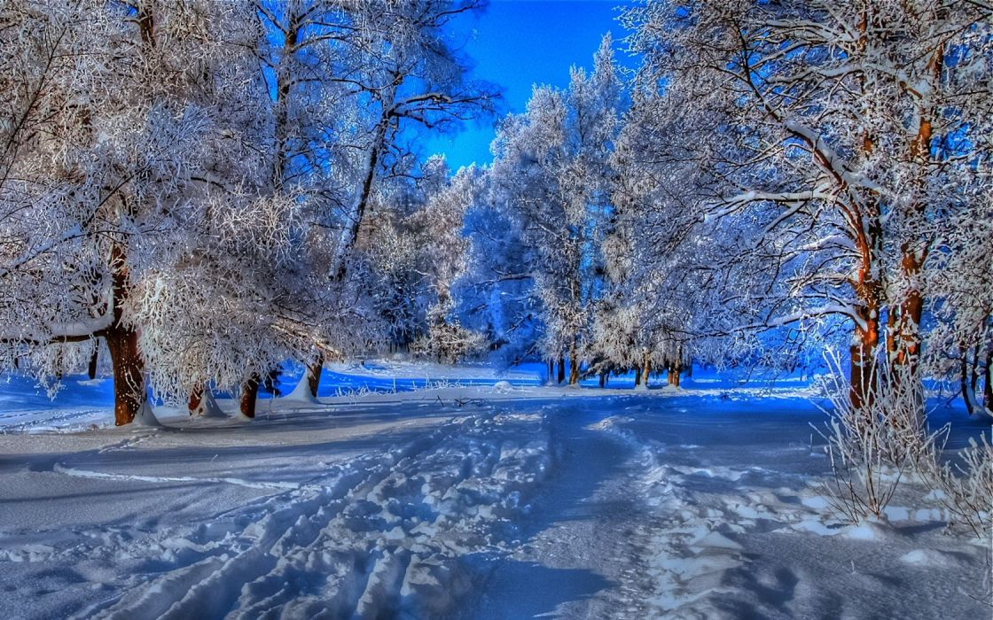 nature landscapes trees forest path trail foot prints hdr blue winter snow seasons cold frost wallpaper