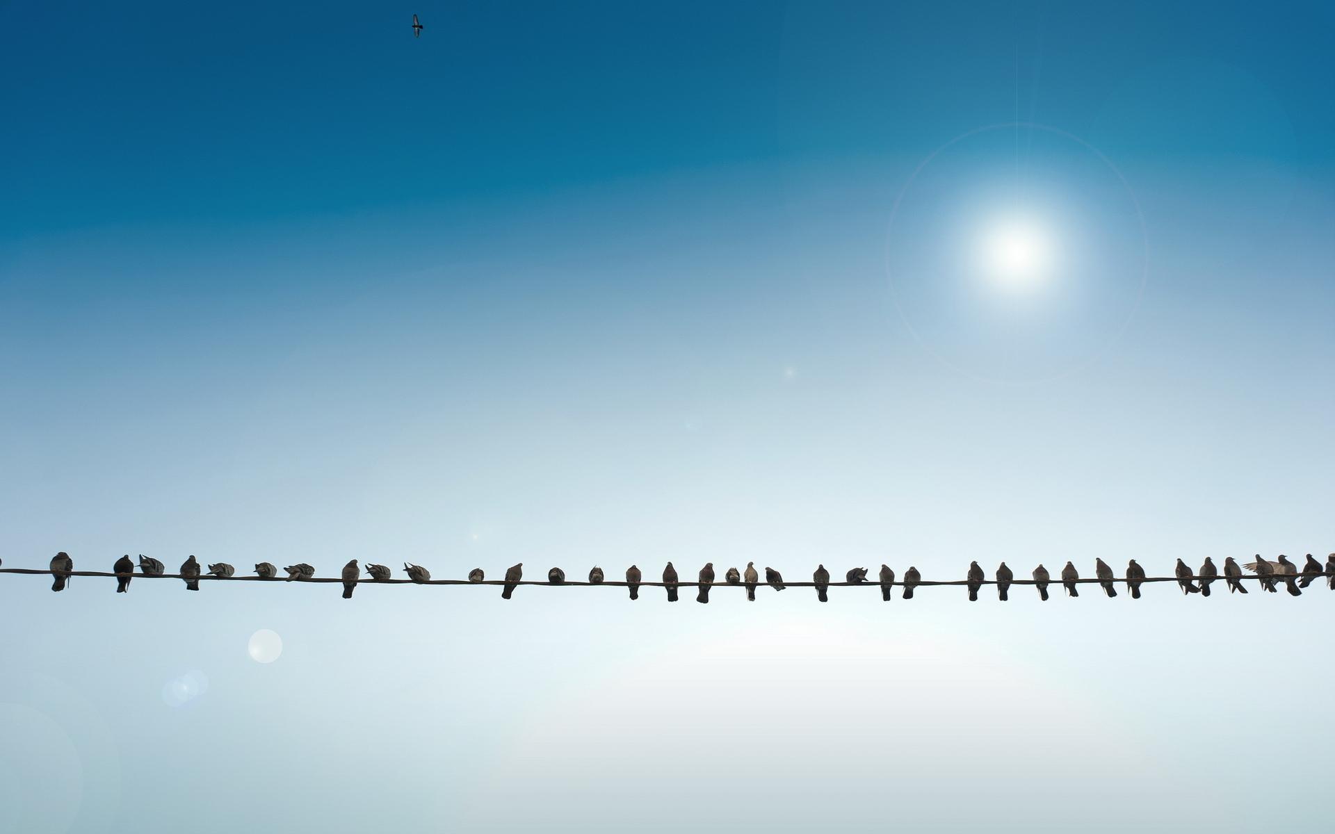 Animals Birds Pigeons Wire Sun Sunlight Flock Feathers Nature