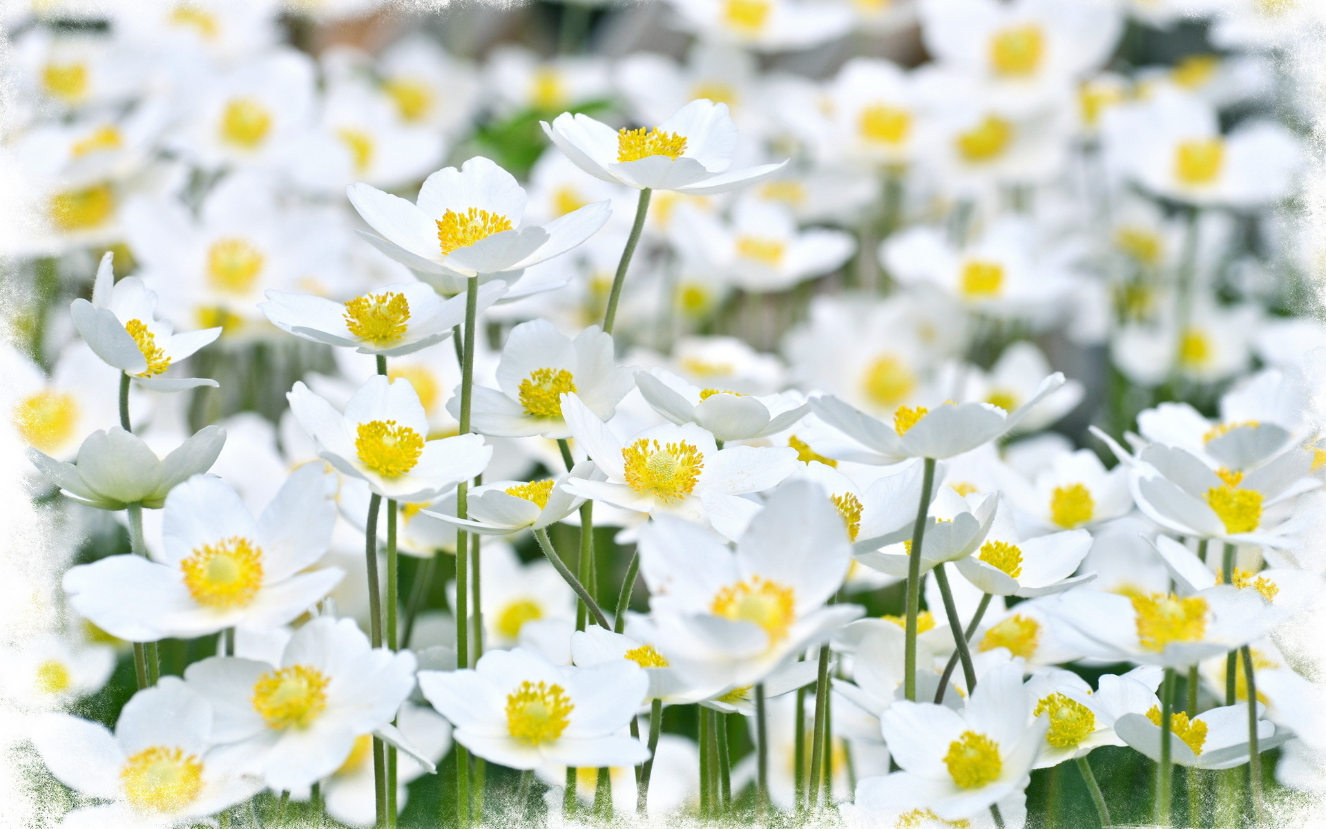 White and yellow flowers choice image flower decoration ideas nature flowers petals plants fields garden bright white yellow nature flowers petals plants fields garden bright mightylinksfo Image collections