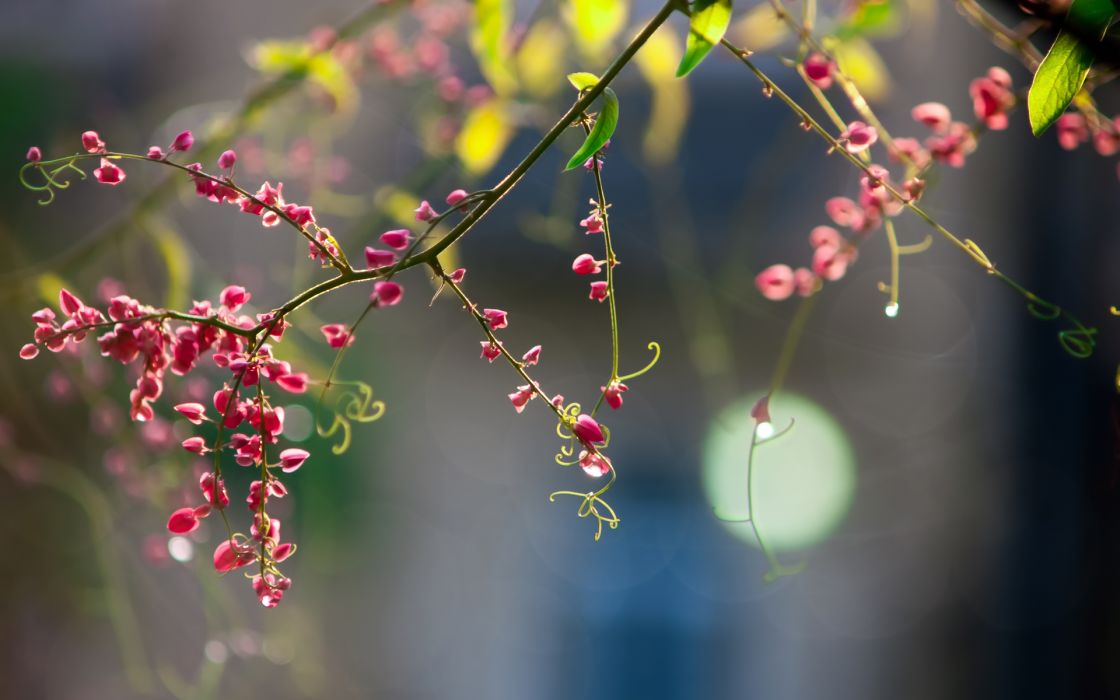 nature flowers blossom trees plants pink macro leaves petals wallpaper