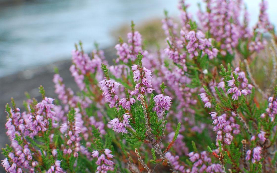 nature flowers purple plants macro wallpaper