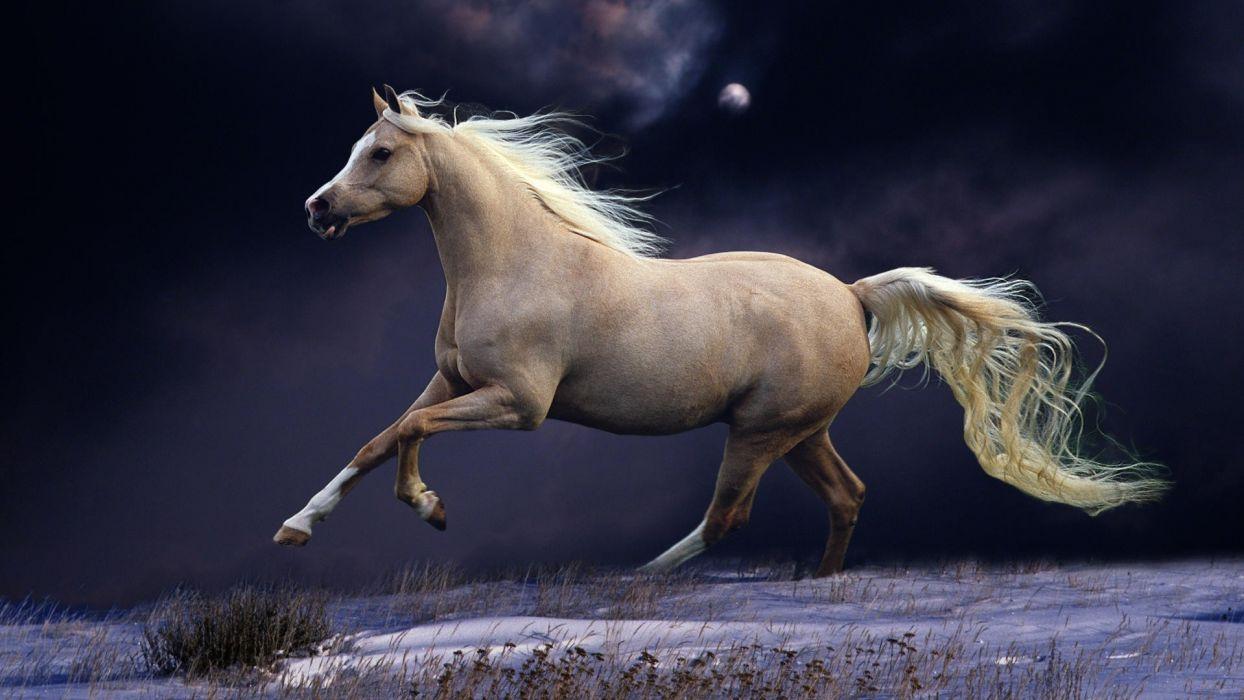 animals horses tail landscapes fields grass cg digital art manipulation sky clouds moon moonlight winter snow seasons wallpaper