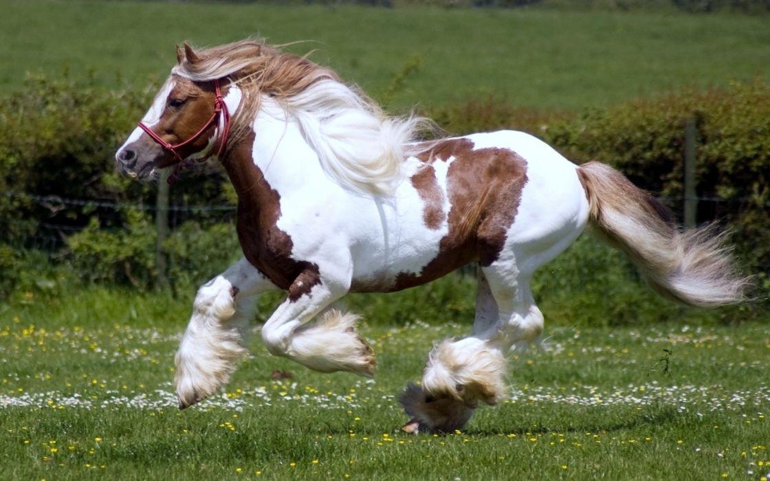 animals horses grass pasture fields wallpaper