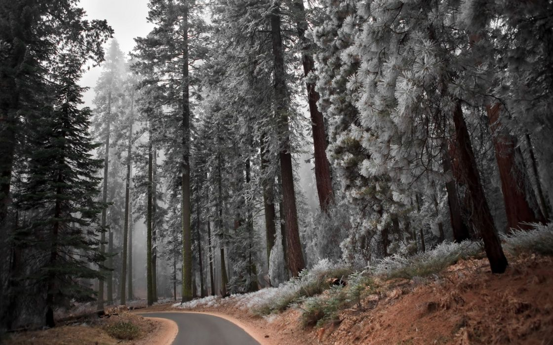 nature landscapes trees forest autumn fall seasons frost cold roads path trail wallpaper