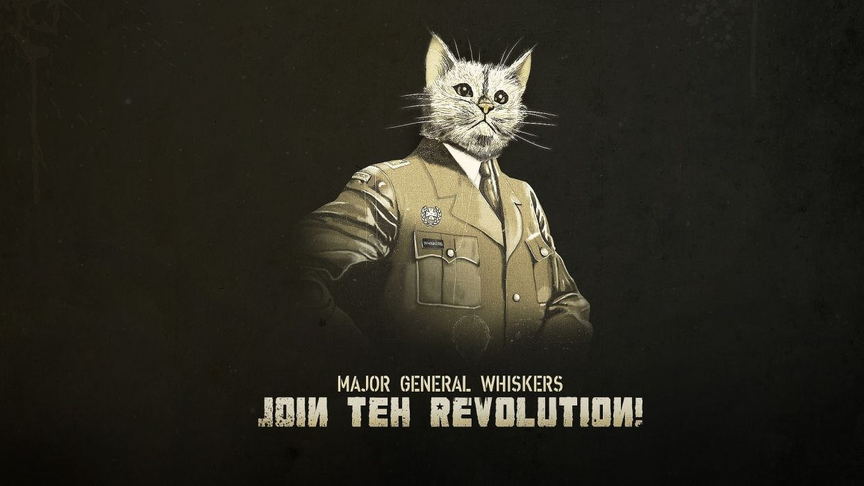 animals cats humor funny uniform statement whiskers kitten military revolution wallpaper