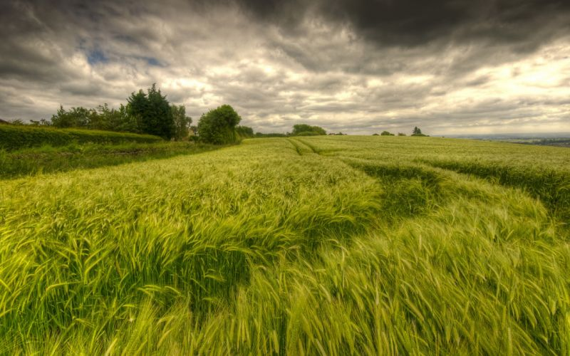 nature landscapes fields grass wheat trees sky clouds hdr wallpaper