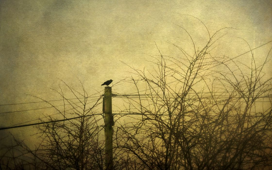 animals birds crows raven retro sepia cross trees lines sky gothic dark photography mood wallpaper