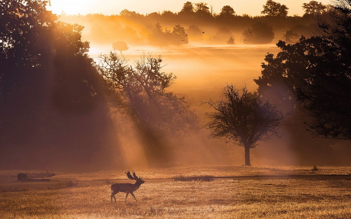animals elk antlers nature landscapes fields trees fog sunlight sunbeam sunrise sunset bright light wallpaper