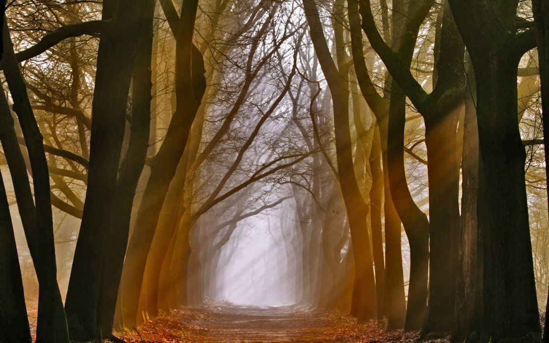 nature landscapes trees forest wood path trail sidewalk leaves autumn fall seasons fog wallpaper