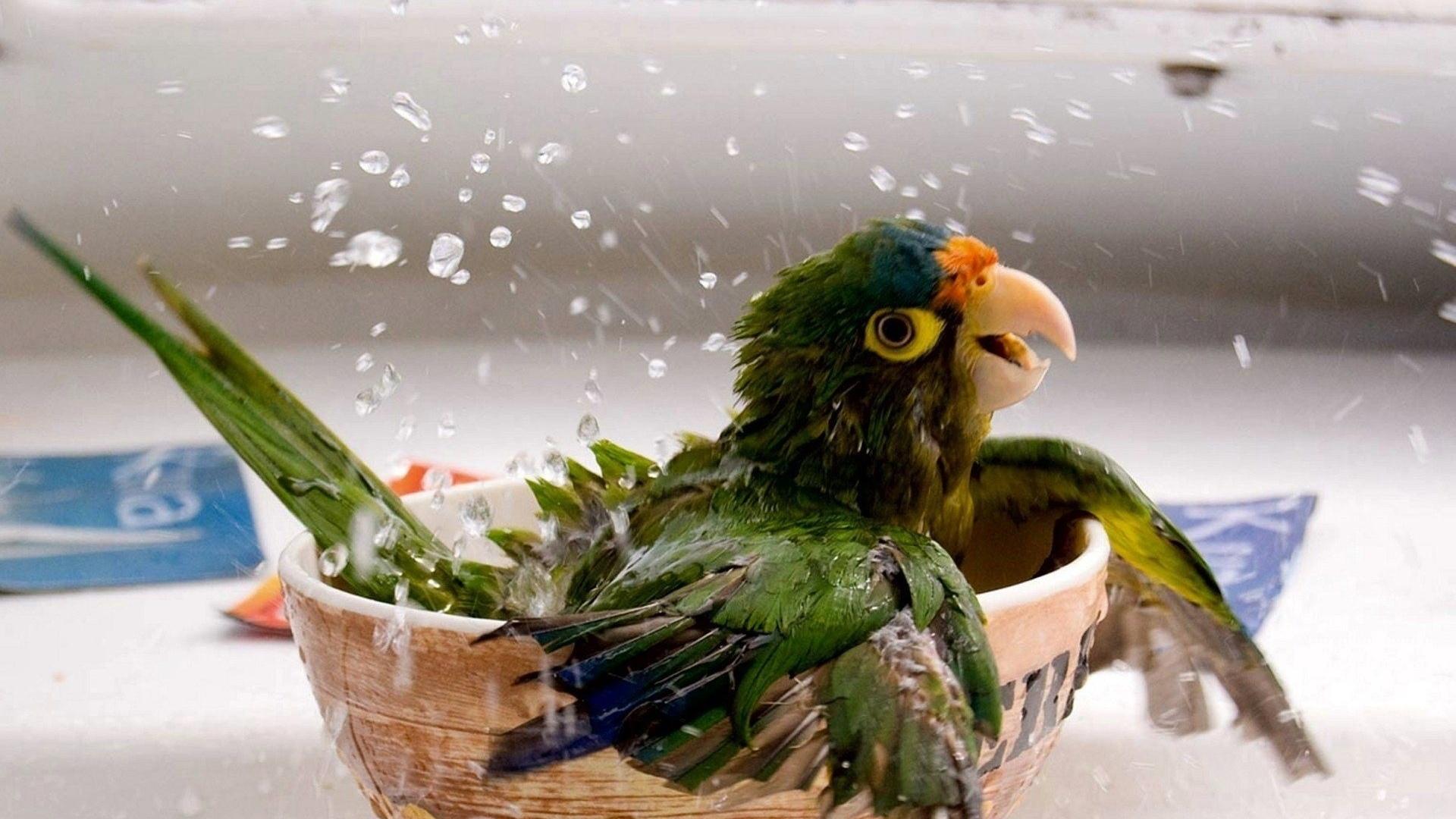 animals birds parrots wings splash drops water yes fun happy humor