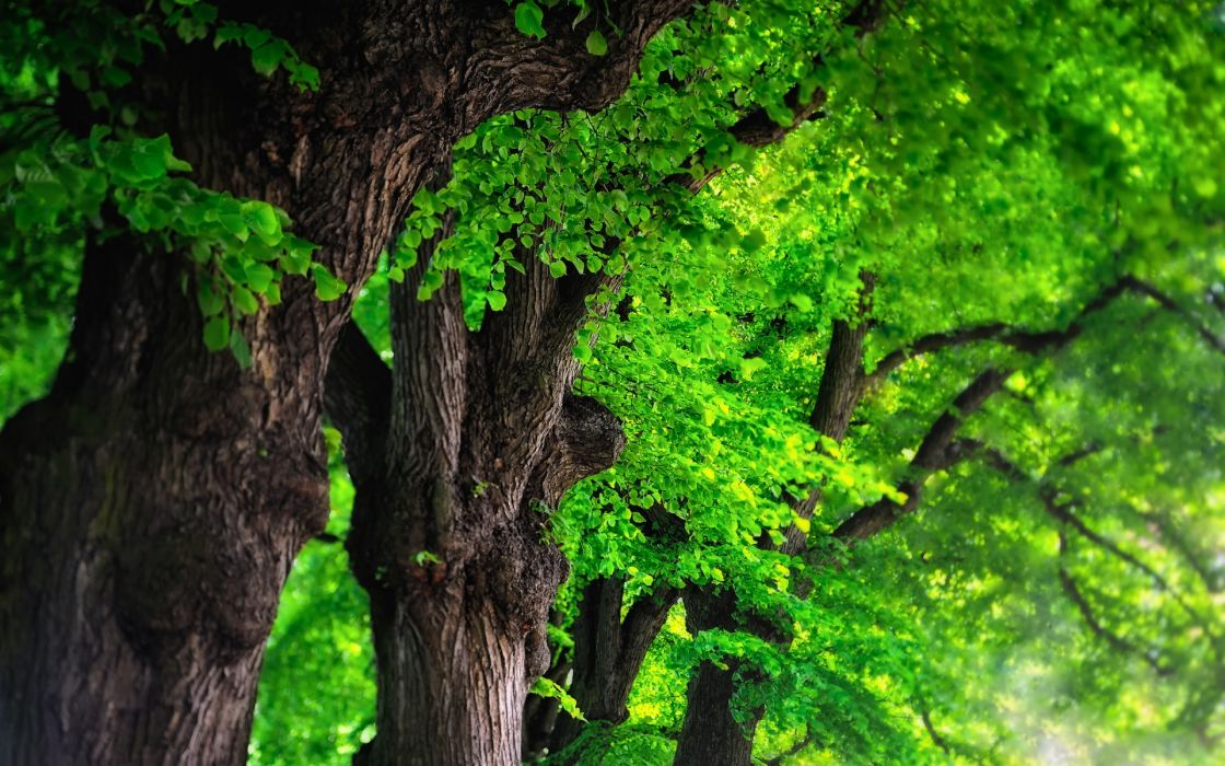 nature leaves trees spring canopy wallpaper