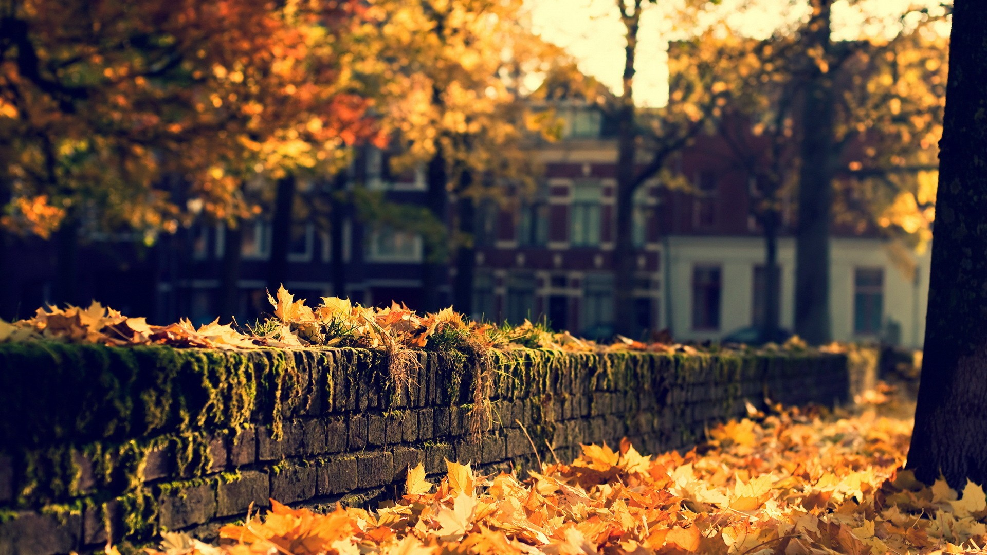 Nature Leaves Autumn Fall Seasons Trees Wall Stone Architecture Buildings Houses Wallpaper