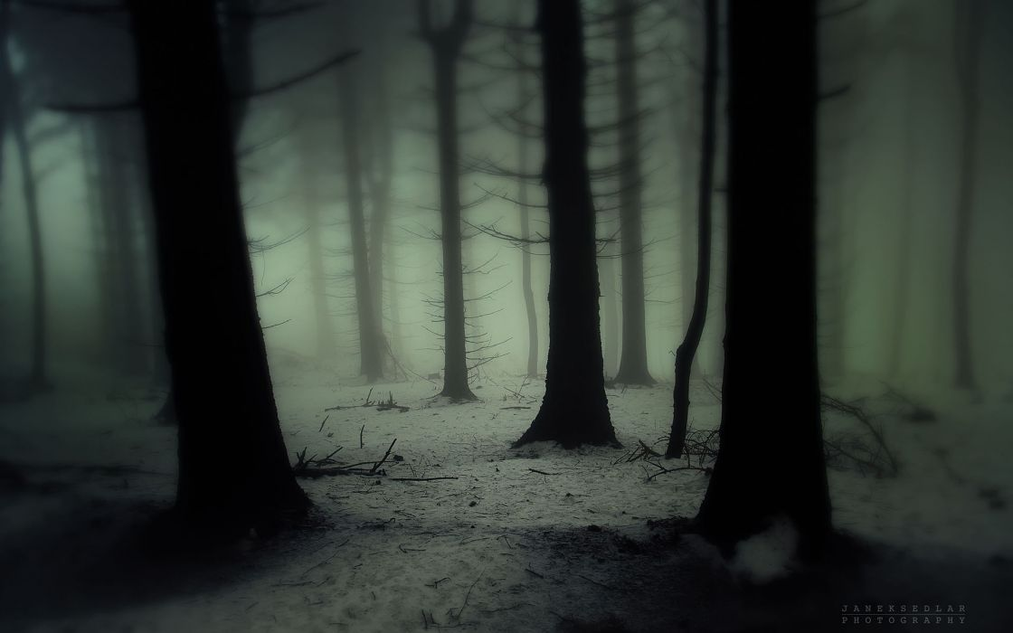 Nature landscapes trees forest wood gloom snowing snow ...