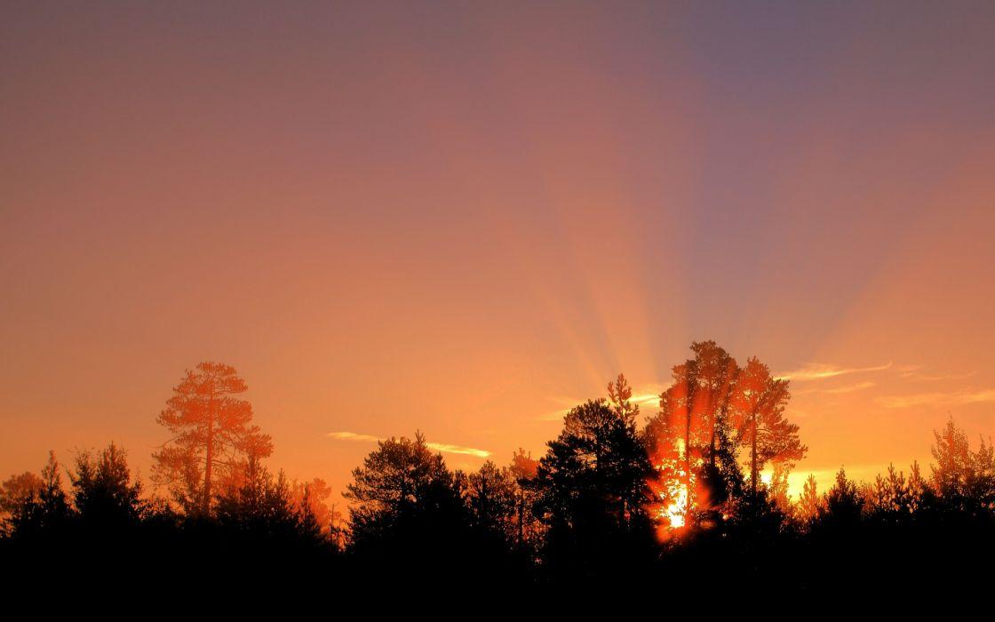 nature sunrise sunset color sunlight sunbeam trees forest sky silhouette wallpaper