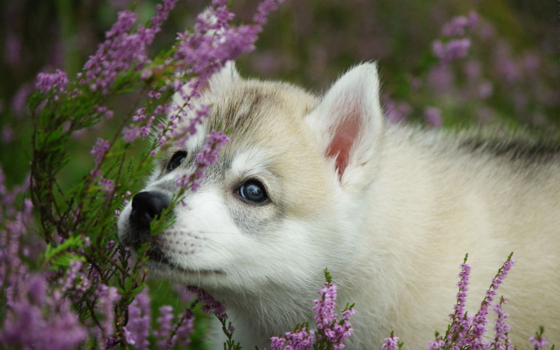 animals dogs babies puppy cute eyes flowers wallpaper