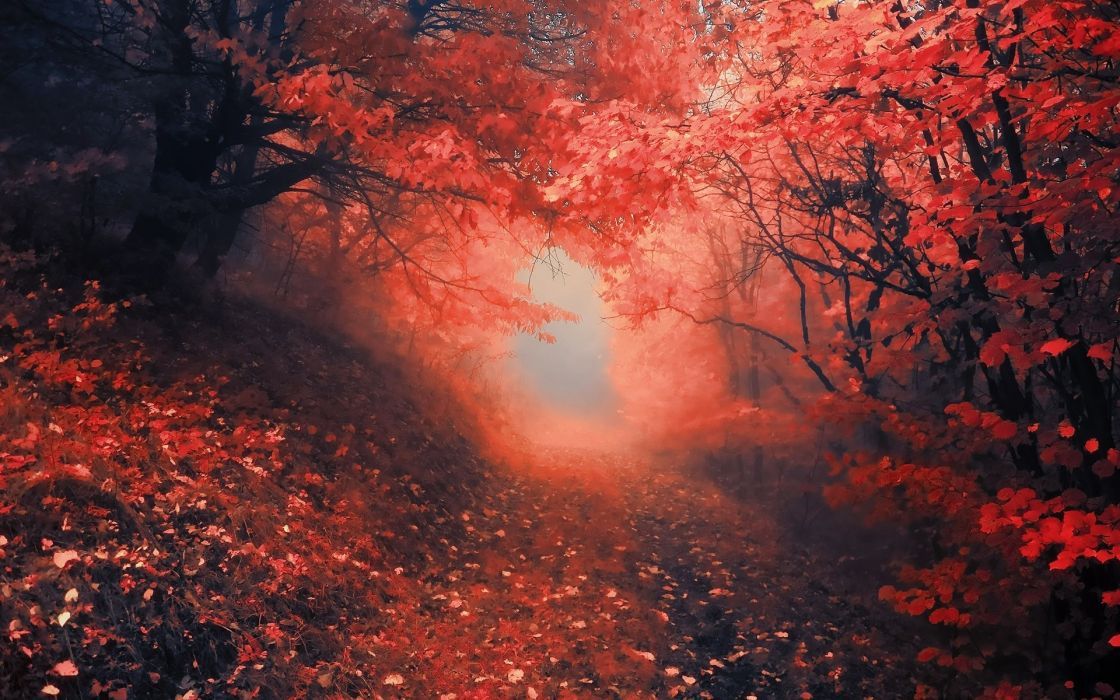 nature roads landscapes trees forest path trail leaves red autumn fall color wallpaper