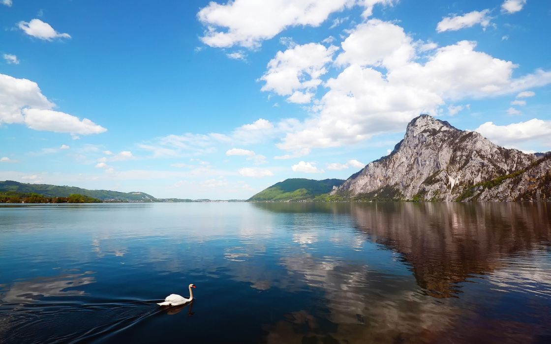 animals birds swan lakes water reflection mountains hills sky clouds trees forest wallpaper