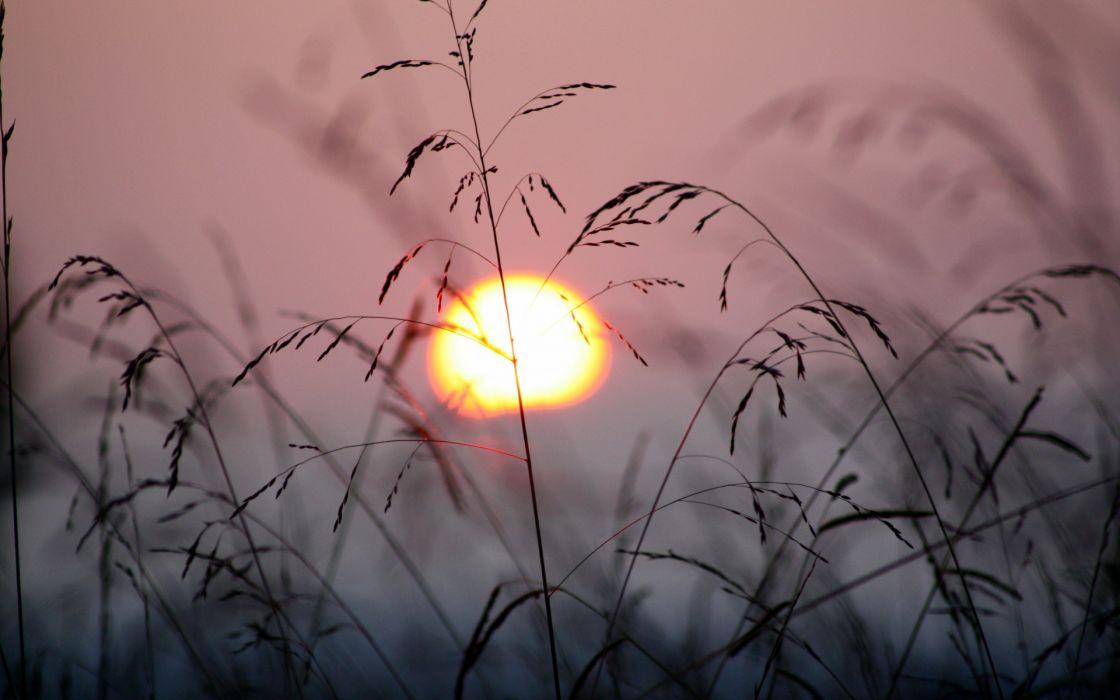 nature sunsets sunrise grass plants sky sun silhouette  wallpaper