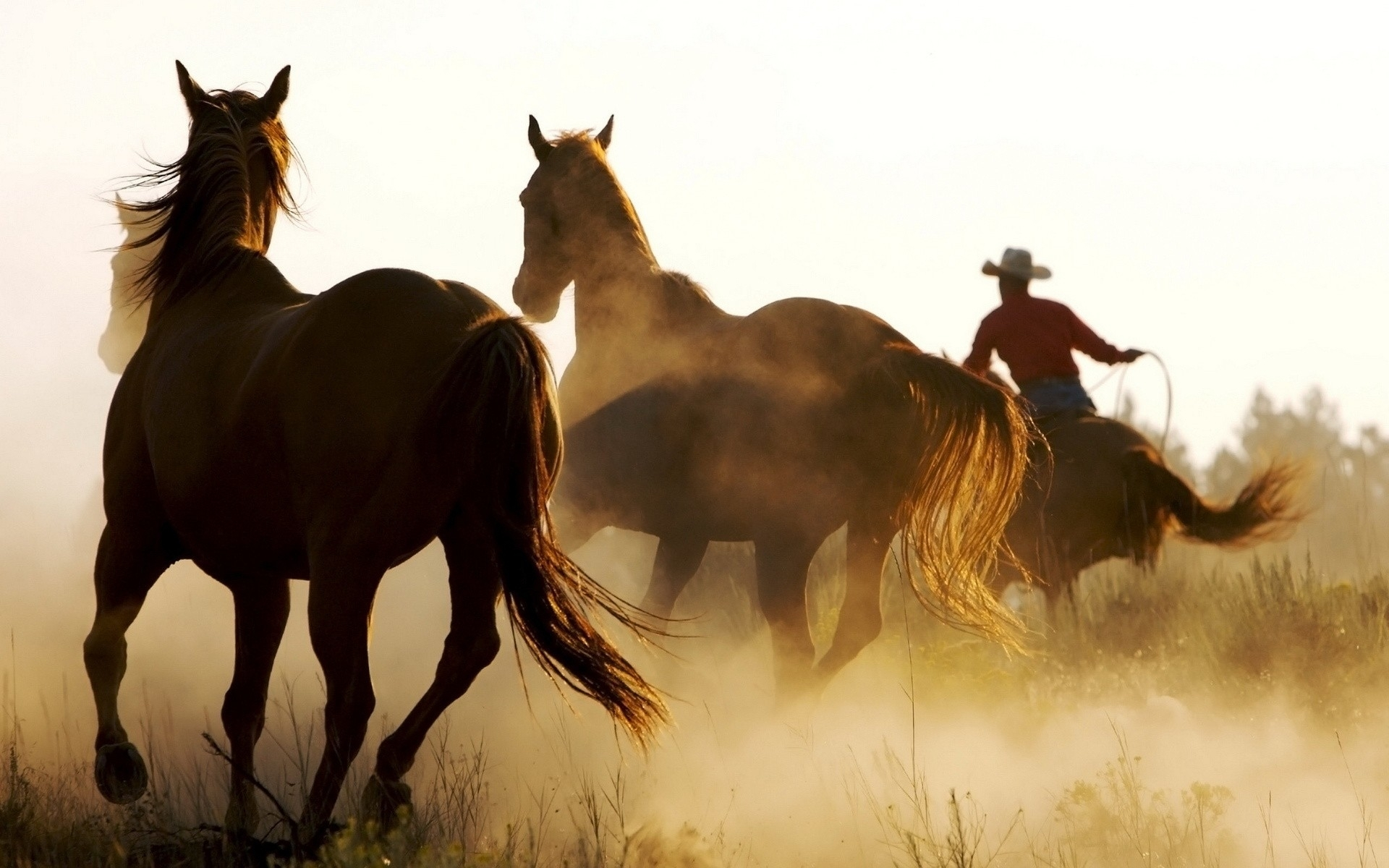 Animals horses people cowboys dust men males rustic ...