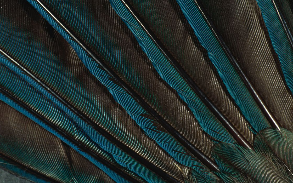 animals bokeh birds feathers psychedelic close up abstract wallpaper
