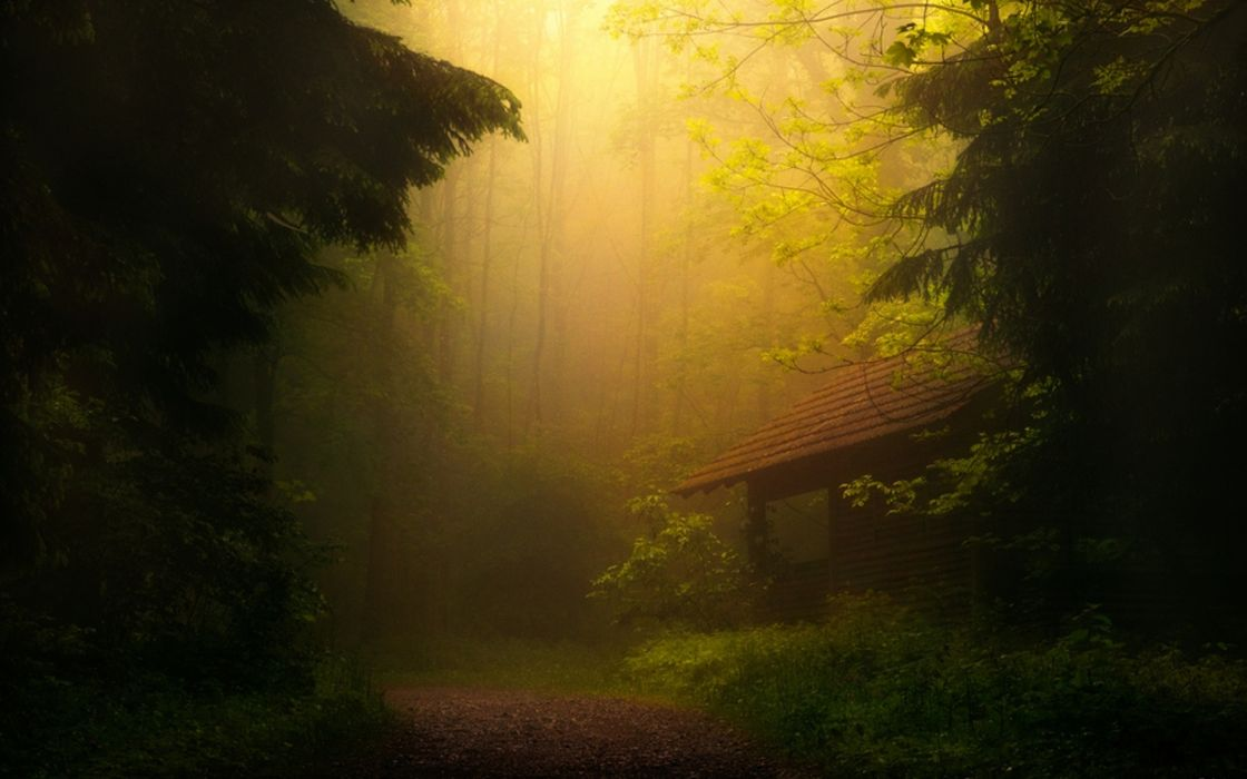 world architecture buildings houses park nature trees forest wood leaves sunlight path trail mood wallpaper