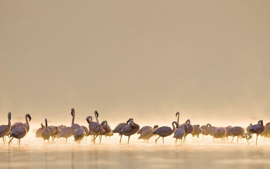 animals birds flamingo tropical lakes water fog mist haze scenic sunlight wallpaper
