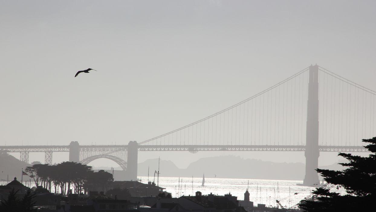 San Francisco Golden Gate Bridge world architecture bay harbor water reflection water sky animals birds seagull trees buildings scenic wallpaper